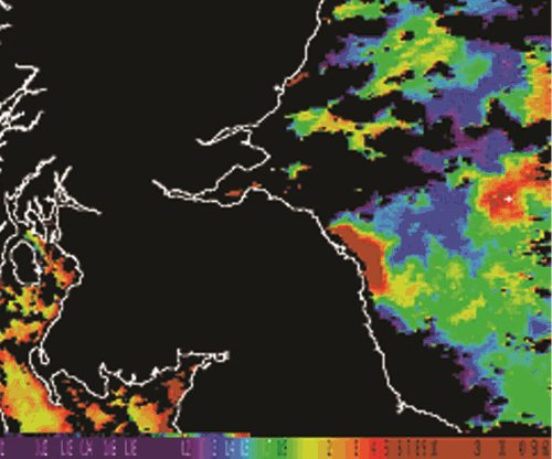 The chlorophyll concentration map that shows pseudo-nitzcha bloom off the Northumberland coast in May 2005
