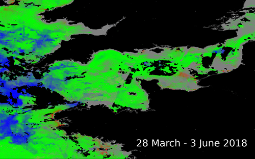 Figure 1. Karenia mikimotoi HAB risk map. The detection algorithm was trained using laboratory measurements. Blue: low chlorophyll concentration, green: enhanced chlorophyll concentration that is not associated with harmful algal blooms (HABs), red: risk of HABs (e.g. west of Brittany), grey: unknown class as colour is dissimilar to training data, black: land or cloud cover.
