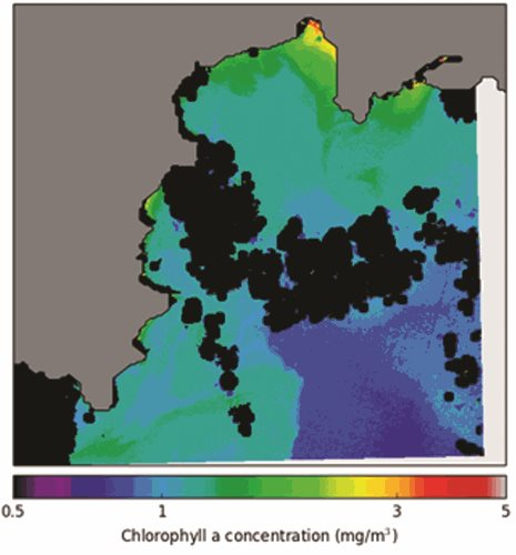 Chlorophyll-a estimates derived from recent Landsat 8 images of St Austell Bay. Black patches represent clouds and their shadows